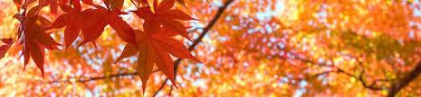 feuilles d'érables