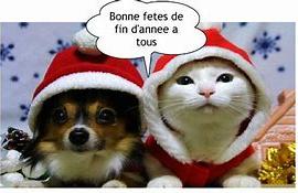 image bonne année chien chat